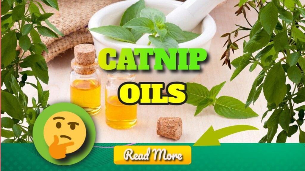 Catnip Oils